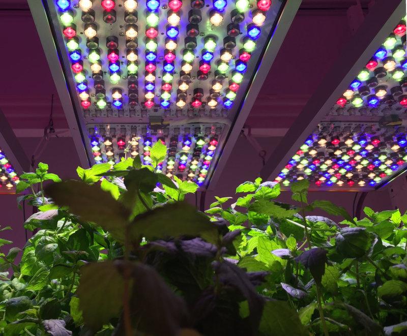 Phytofy Research Light